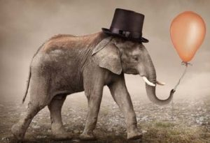 Elefant mit Hut